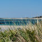 reeds in foreground with a beach and turquoise sea peeking through in the background