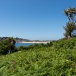 palm tree and ferns in the foreground with a beach and small town in the background