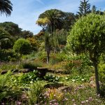 sub-tropical gardens with many plants and a pond