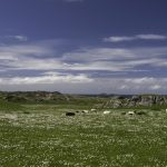 black and white sheep grazing on a grassy plain with the sea in the background