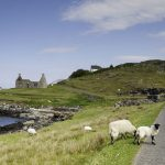 sheep and lambs grazing in the foreground by a singletrack road winding its way to the left and houses, including a ruin, in the background