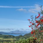 bush with bright red flowers or berries in the foreground with a loch and mountains in the background